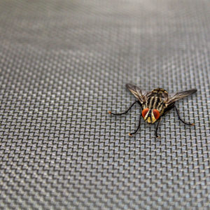 Bee and Insect Mesh